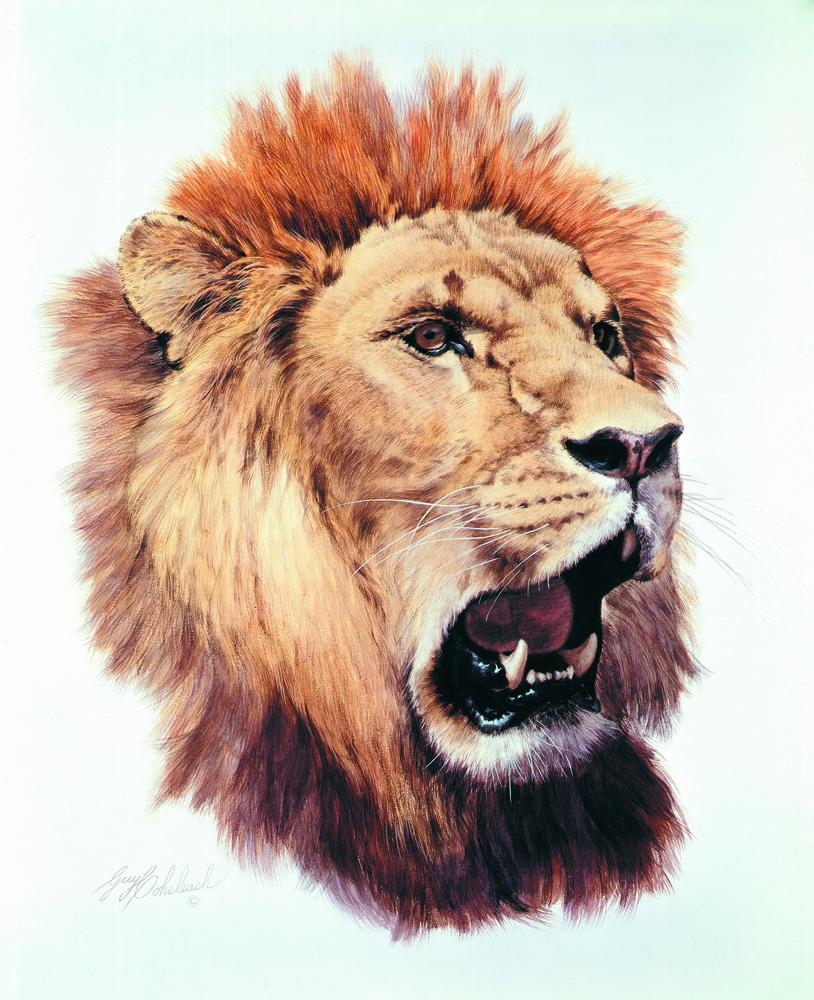 """African Lion""  -  20"" x 25"" ""African Lion"" - Portraits  Big Cat Heads  Cat Head Paintings"