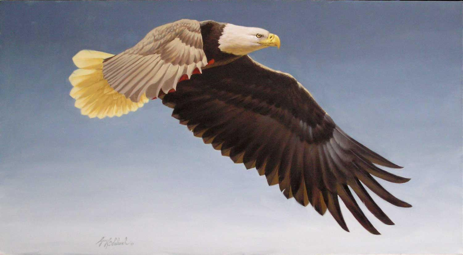 """American Eagle""  -  30"" x 50"" ""American Eagle""  Birds of Prey  Raptors"