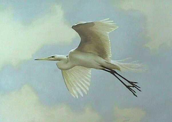 """American Egret""   -  22"" x 30"" ""American Egret"" - Water Birds  Waterfowl Paintings  Waterbird Paintings"