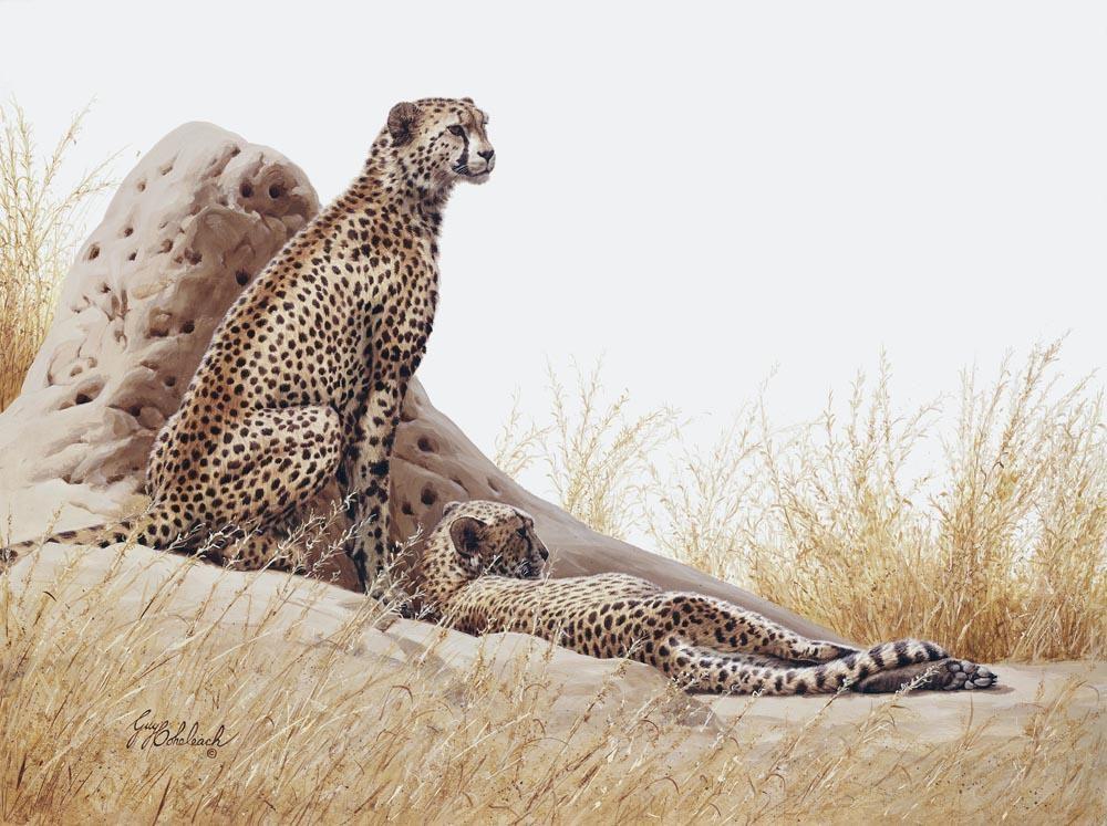 """""""At Ease""""  -  30"""" x 40"""" """"At Ease"""" - Cheetahs  Cheetah  cheeta"""