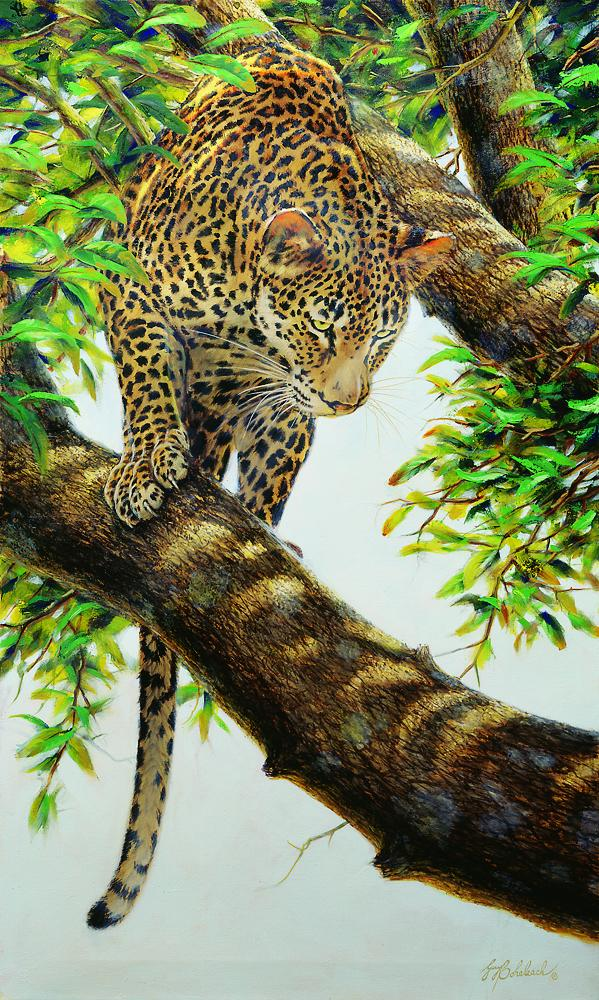 """Beware Below LG""  -  50"" x 30"" ""Beware Below Lg"" - Leopards  Leoparp Paintings  Leopard Art"