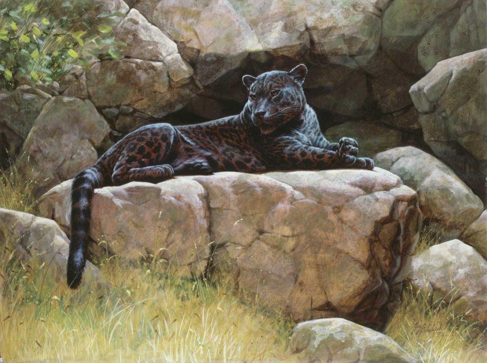 """Black Jaguar""  - 30"" x 40"" ""Black Jaguar"" - American Cats  American wild cats  Wild Felines of America"