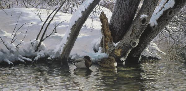 """""""Brightwater Creek, Mallards""""  -  36"""" x 72"""" """"Brightwater Creek, Mallards"""" - Water Birds  Waterfowl Paintings  Waterbird Paintings"""