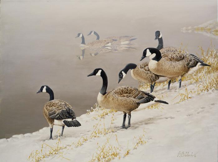 """""""Canada Geese 2""""  -  30"""" x 40"""" """"Canada Geese 2"""" - Water Birds  Waterfowl Paintings  Waterbird Paintings"""