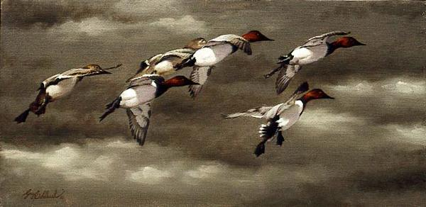 """Cans""  -  15"" x 30"" ""Cans"" - Water Birds  Waterfowl Paintings  Waterbird Paintings"