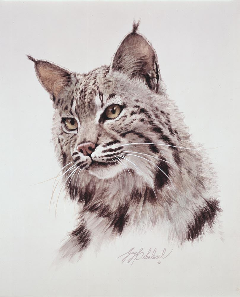 """Cats of America, Bobcat""  -  15""x18"" ""Cats of America, Bobcat"" - Portraits  Big Cat Heads  Cat Head Paintings"