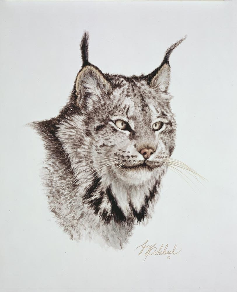 """Cats of America, Lynx""  -  15""x18"" ""Cats of America, Lynx"" - Portraits  Big Cat Heads  Cat Head Paintings"