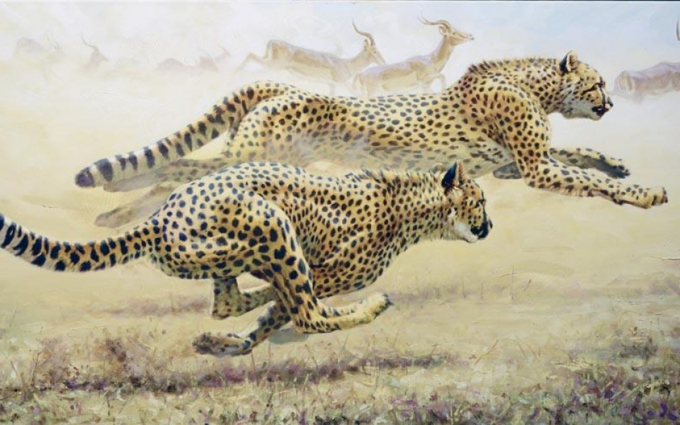 """Cheetah Chase""   -  36"" x 72"" ""Cheetah Chase""  - Cheetahs  Cheetah  cheeta"