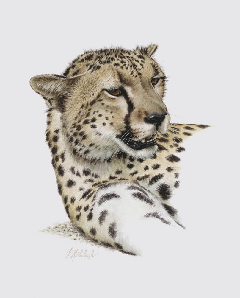 """Cheetah Head""  -  16""x20"" ""Cheetah Head"" - Portraits  Big Cat Heads  Cat Head Paintings"