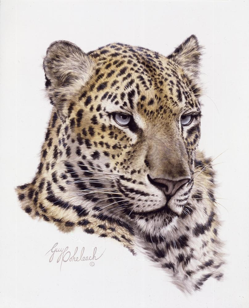 """Chinese Leopard Head""  -  16"" x 20"" ""Chinese Leopard Head"" - Portraits  Big Cat Heads  Cat Head Paintings"