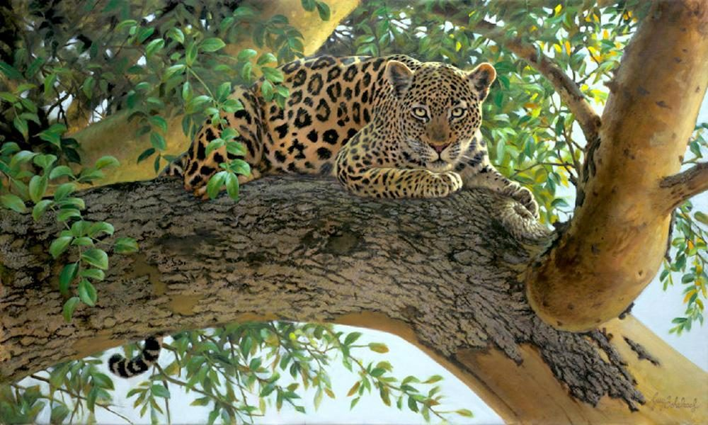 """Concentration""  -  30"" X 50"" ""Concentration"" - Leopards  Leoparp Paintings  Leopard Art"