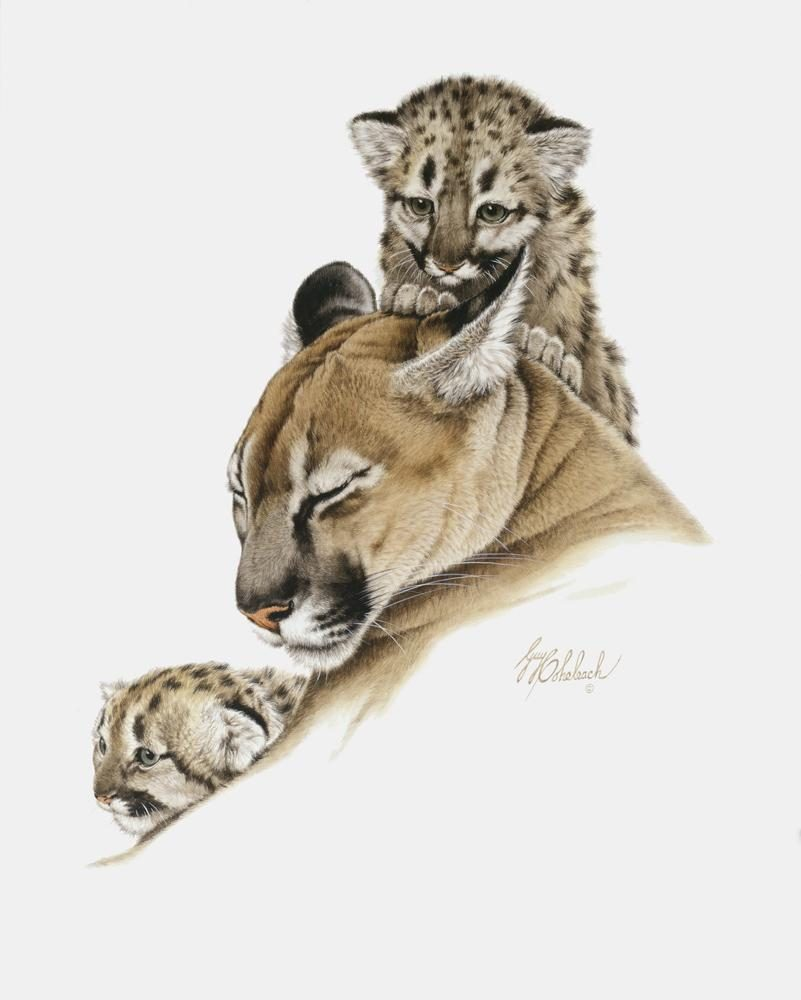 """Cougar & Cubs""   -  20"" x 26"" ""Cougar & Cubs"" - American Cats  American wild cats  Wild Felines of America"