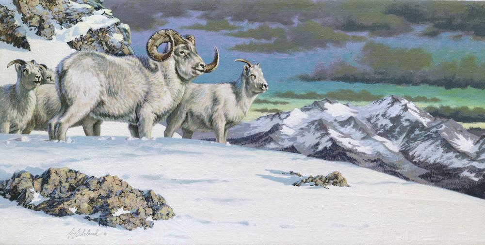 """Dall Sheep in Snow""  -  12"" x 24"" ""Dall Sheep in Snow"" - American Game  American Big Game  American Prey Animals"