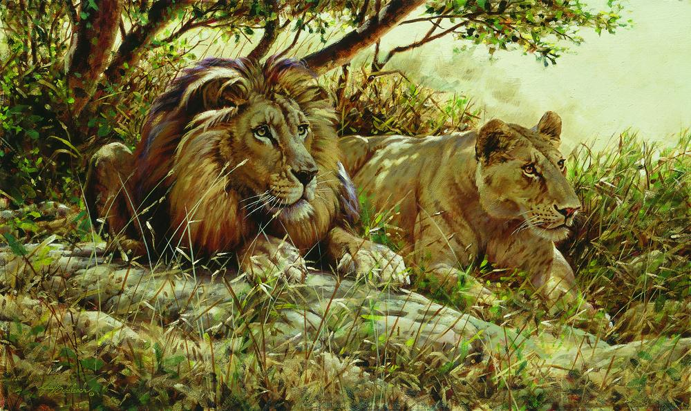 """Distraction""  -  24"" x 44"" ""Distraction"" - Lions  Lion Art  Lion Paintings"