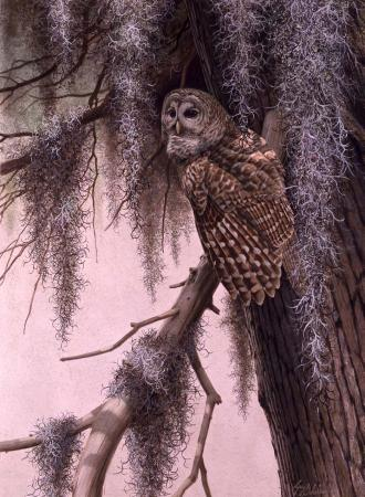 """Diurnal Retreat, Barred Owl""  -  30"" x 40"" ""Diurnal Retreat, Barred Owl"" - Owls  Owl Paintings  Owl Artwork"