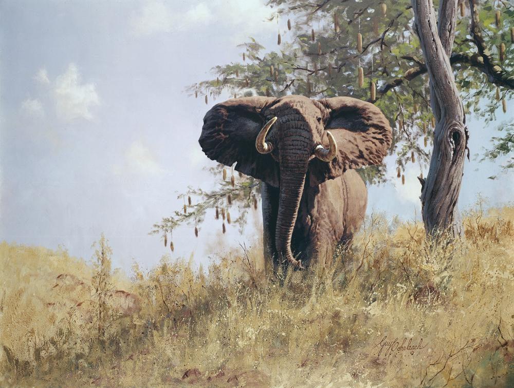 """""""Elephant and Sausage Tree""""  -  30"""" x 40"""" """"Elephant and Sausage Tree"""" - Elephants  Elephant Paintings  Elephant Art"""