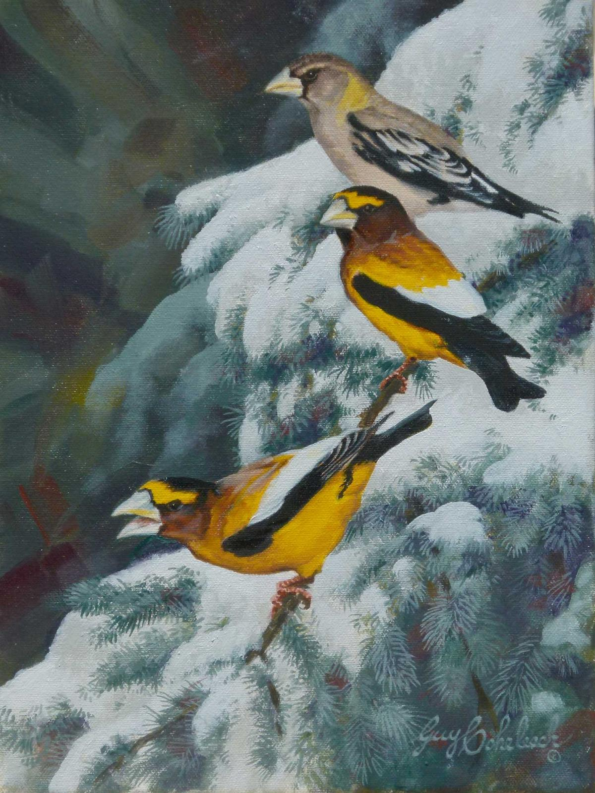 """Evening Grosbeak""  -  12"" x 9"" ""Evening Grosbeak"" - Birds  Song Birds  Game Birds"