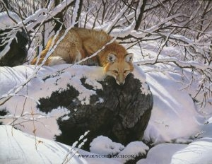 """Foxfire""  -  30"" x 40"" ""Foxfire"" - Canine  Wild Canine Paintings  Wolf and Fox Artwork"
