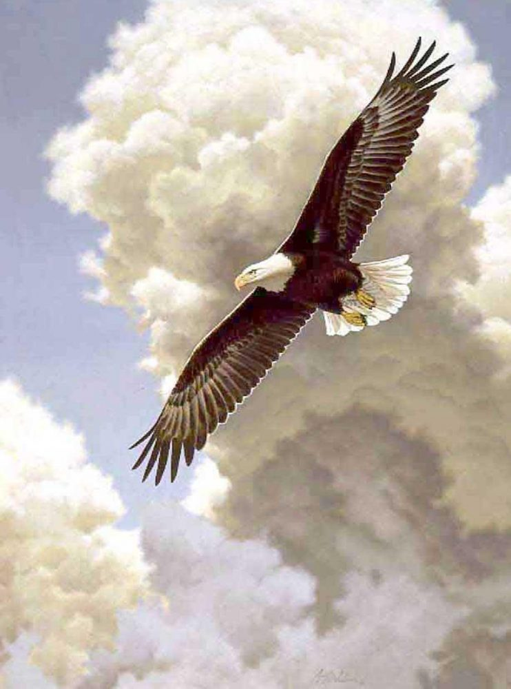 """""""Freedom""""  -  30"""" x 23"""" """"Freedom""""  Birds of Prey  Raptors"""