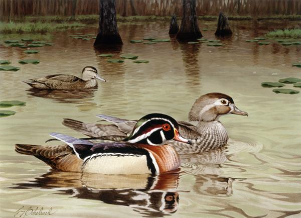 """Georgia Wood Ducks""  -  13"" x 18"" ""Georgia Wood Ducks"" - Water Birds  Waterfowl Paintings  Waterbird Paintings"