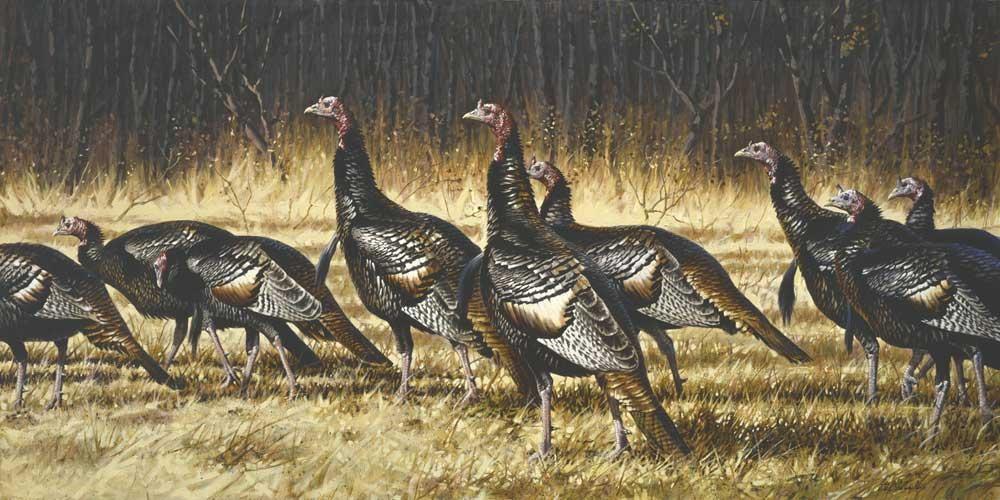 """""""Gobblers"""" -  Wild Turkeys  -  36"""" x 72"""" """"Gobblers, Wild Turkeys"""" - Birds  Song Birds  Game Birds"""