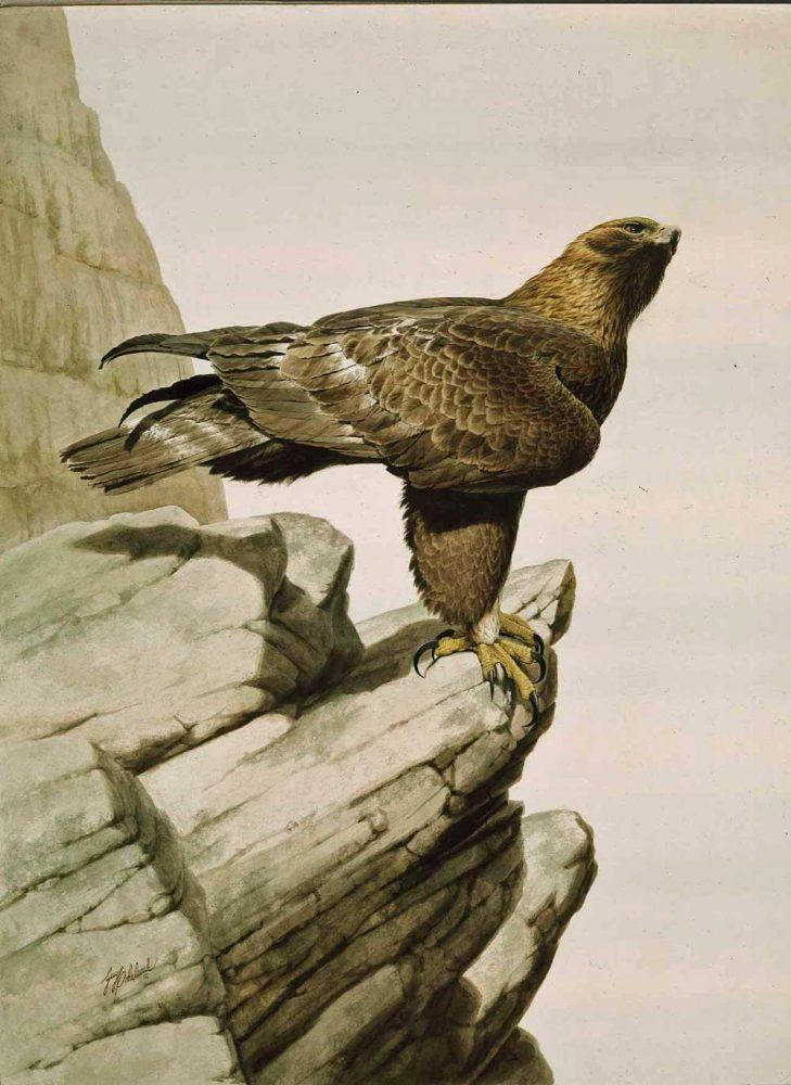 """""""Golden Eagle""""  -  40"""" x 30"""" """"Golden Eagle""""  Birds of Prey  Raptors"""