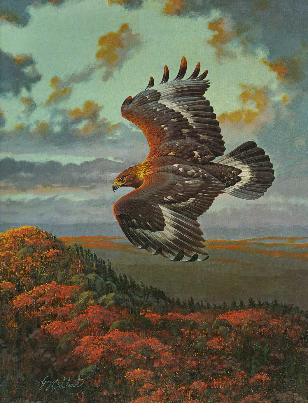 """Golden Eagle/Hawk Mountain""  -  40"" x 30"" ""Golden Eagle"" - Hawk Mountain  Birds of Prey  Raptors"