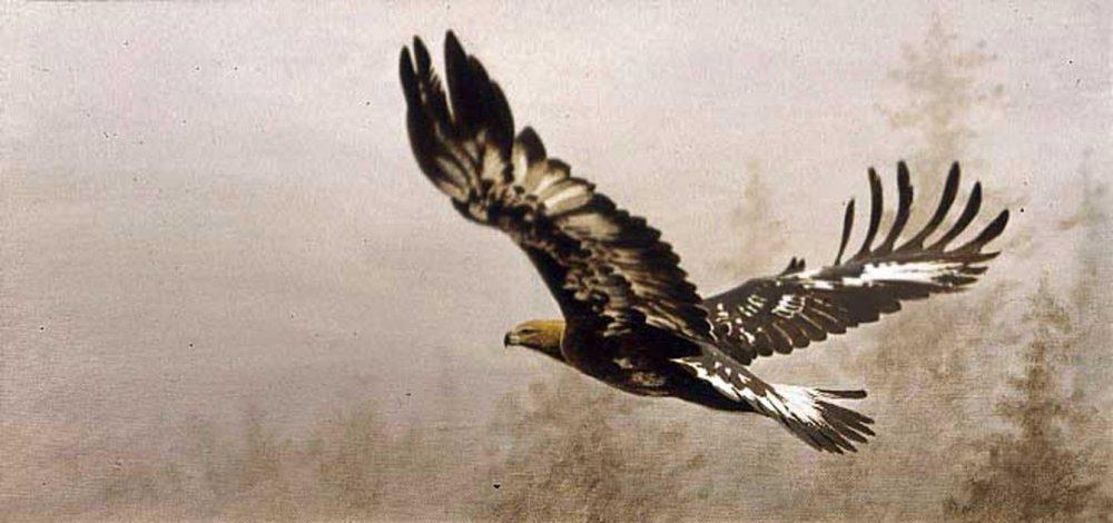 """Golden Eagle, Imm.""  -  12"" x 24"" ""Golden Eagle, Imm.""  Birds of Prey  Raptors"