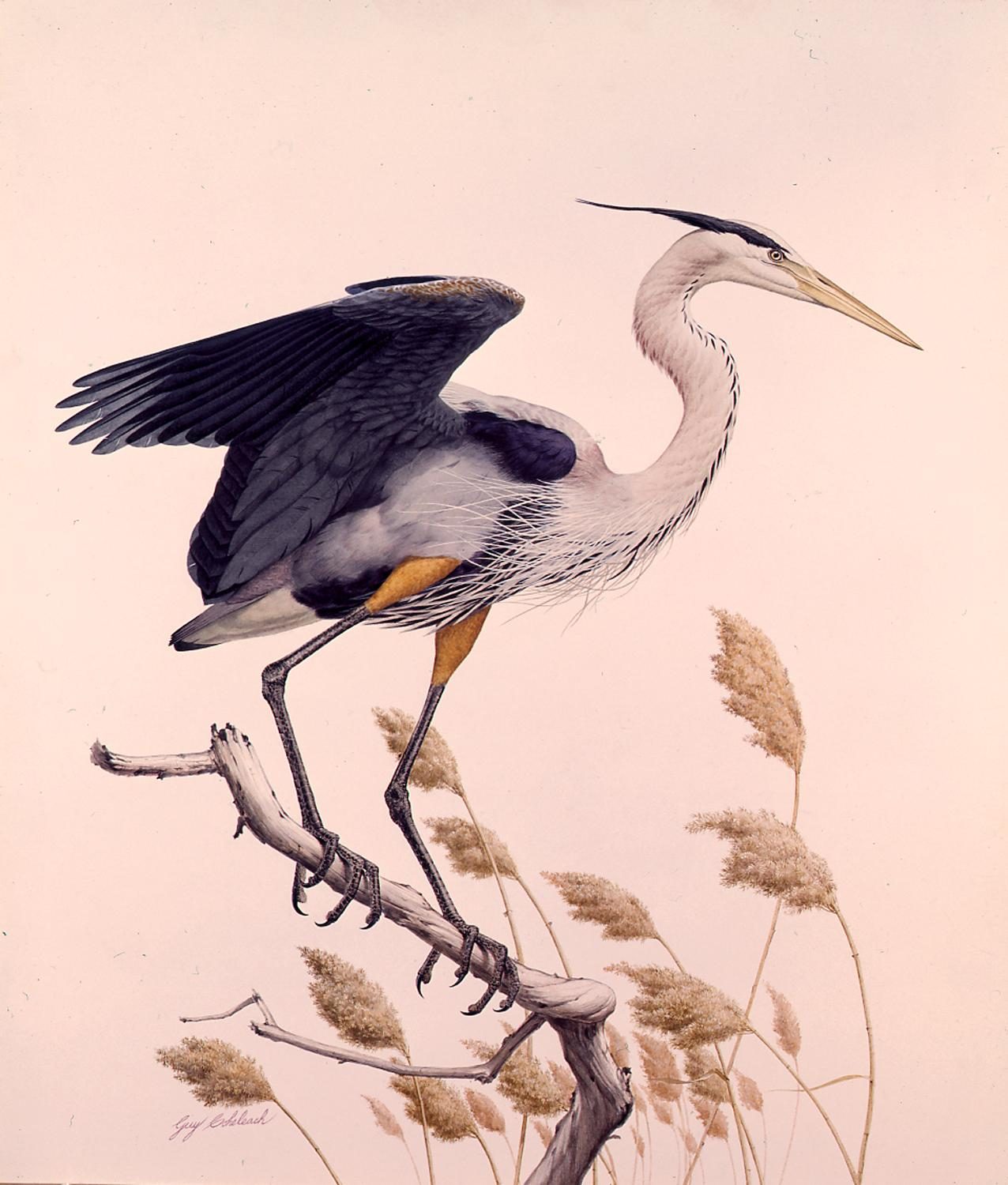 """Great Blue Heron""  -   38"" x 30"" ""Great Blue Heron"" - Water Birds  Waterfowl Paintings  Waterbird Paintings"