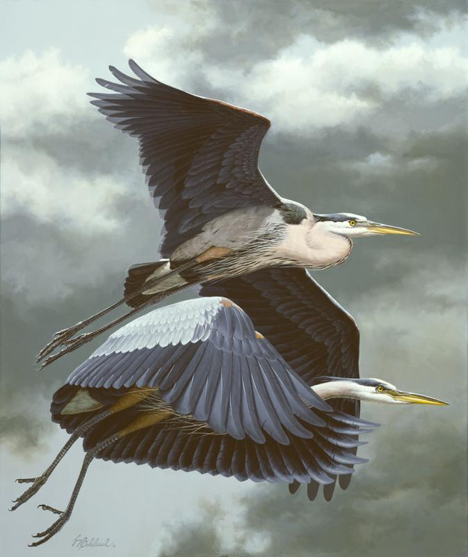 """Great Blue Herons""   -  34"" x 28"" ""Great Blue Herons"" - Water Birds  Waterfowl Paintings  Waterbird Paintings"