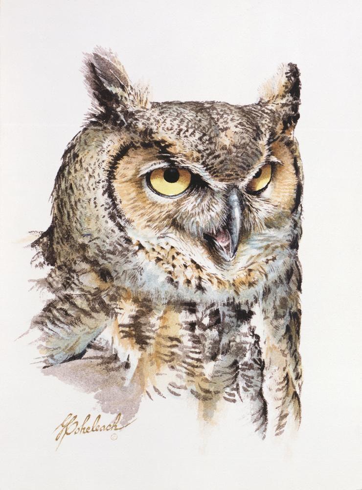 """Great Horned Owl""   -  12"" x 9"" ""Great Horned Owl"" - Owls  Owl Paintings  Owl Artwork"