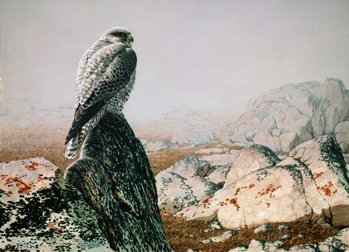 """Grey Gyrfalcon""  -  30"" x 40"" ""Grey Gyrfalcon""  Birds of Prey  Raptors"