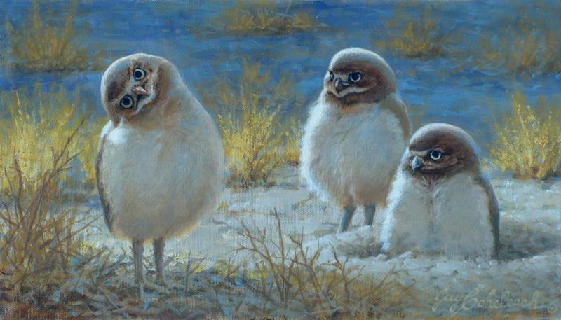 """I'm A Burrowing Owl And You?"" Sketch  -  8"" x 14"" ""I'm A Burrowing Owl And You?"" - Owls  Owl Paintings  Owl Artwork"