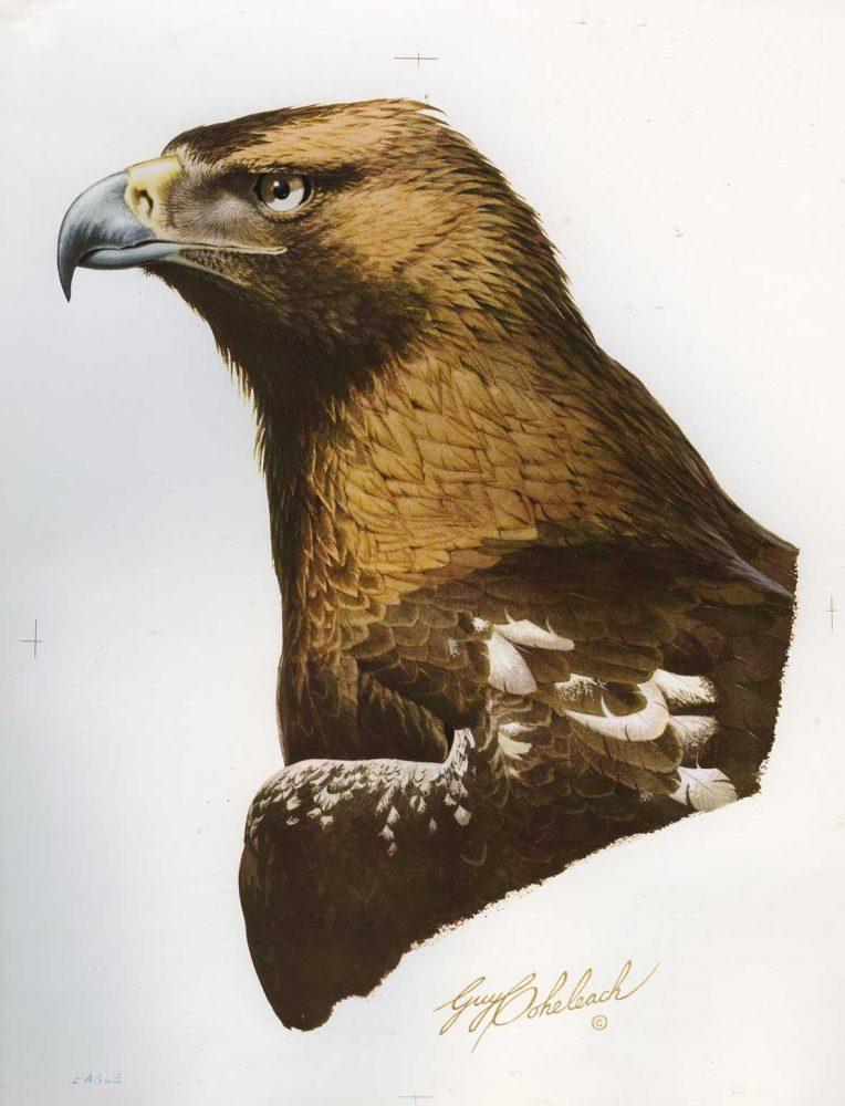 """Imperial Eagle""  -   12"" x 18"" ""Imperial Eagle""  Birds of Prey  Raptors"
