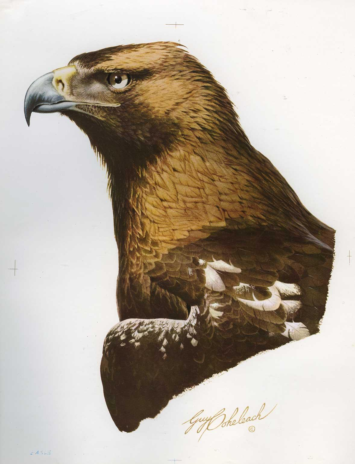 """Imperial Eagle""  -   12"" x 18"" ""Imperial Eagle""  Birds of Prey  Raptors"