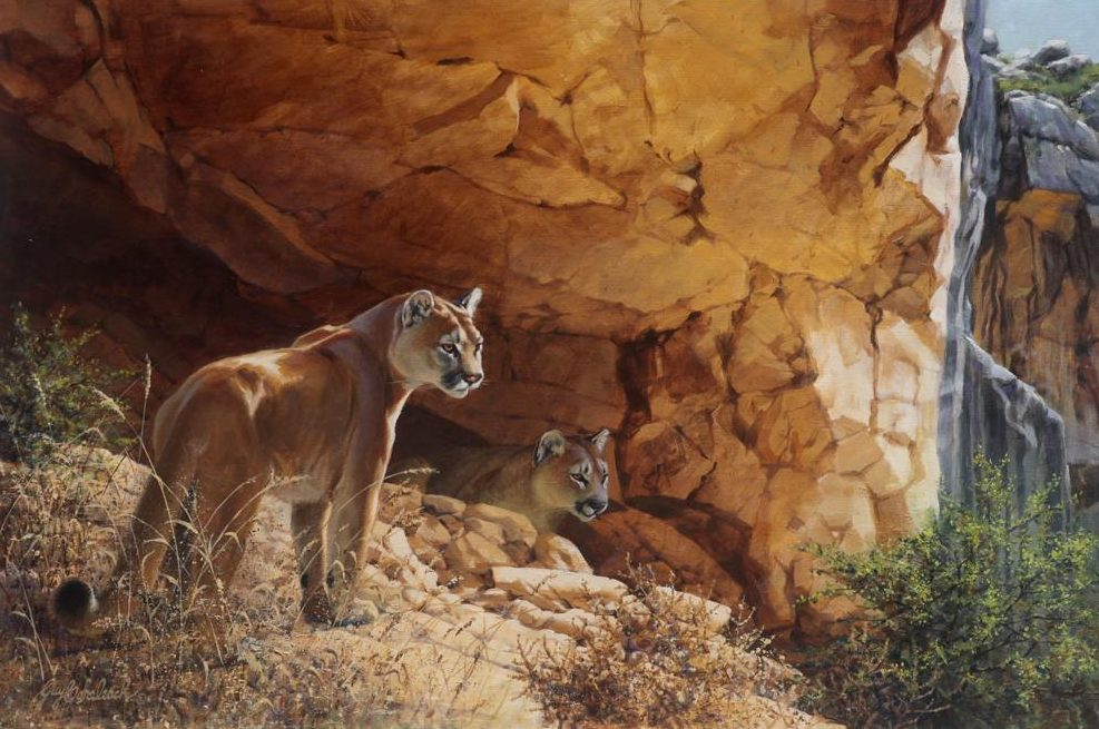 """Indian Head Puma""   -  24"" x 36"" ""Indian Head Puma"" - American Cats  American wild cats  Wild Felines of America"