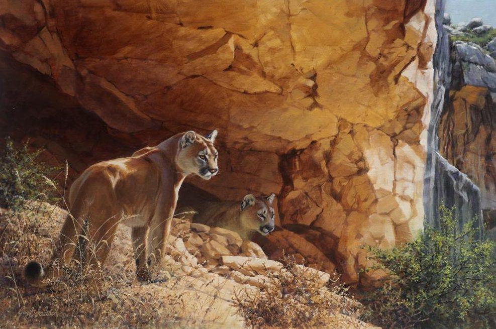 """Indian Head Puma""   -  24"" x 36"" ""Indian Head Puma"" - American Cats  American wild cats  Wild Felines of America"