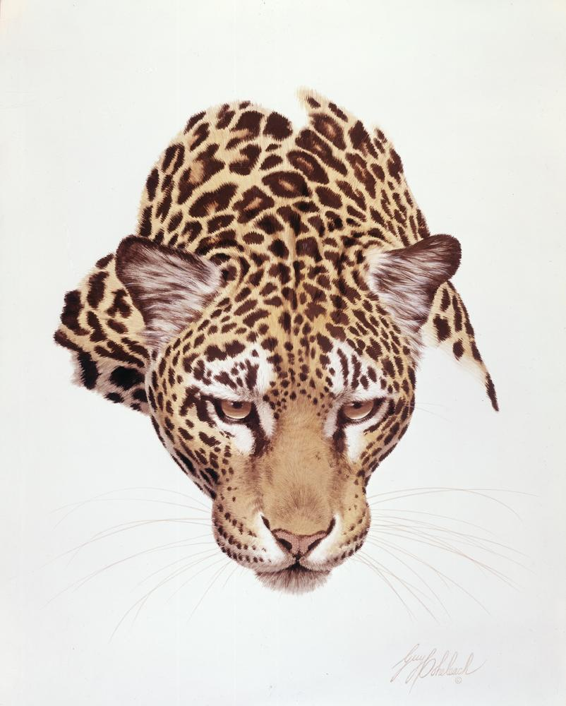 """Jaguar Head""  -  16""x20"" ""Jaguar Head"" - Portraits  Big Cat Heads  Cat Head Paintings"