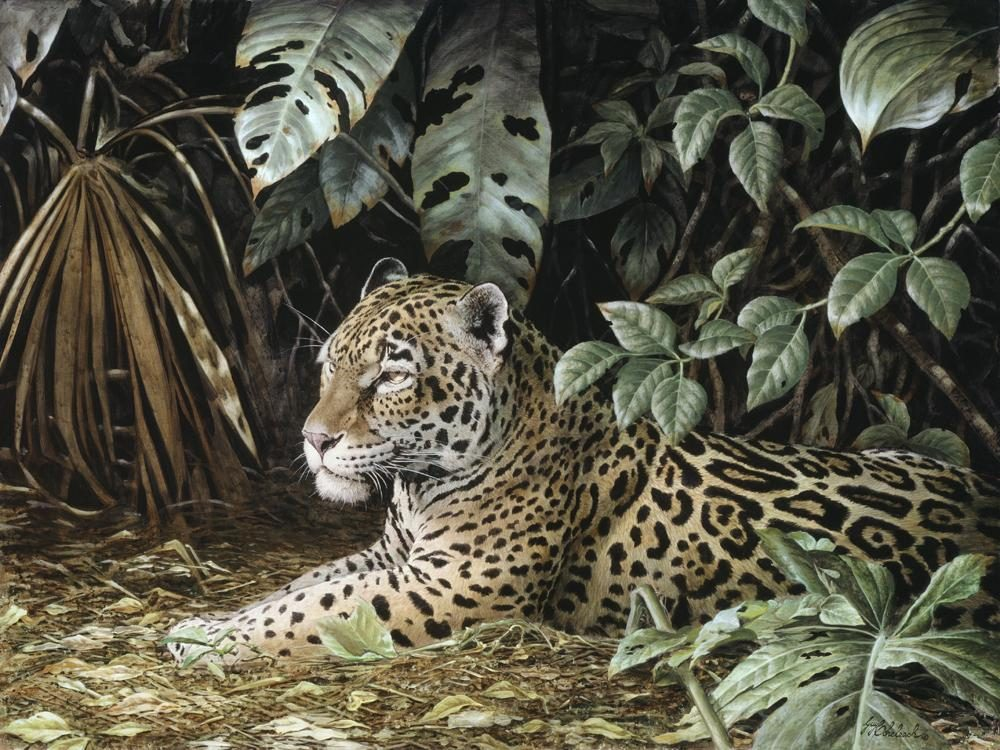 """Jungle Cover Jaguar""  -  30"" x 40"" ""Jungle Cover Jaguar"" - American Cats  American wild cats  Wild Felines of America"