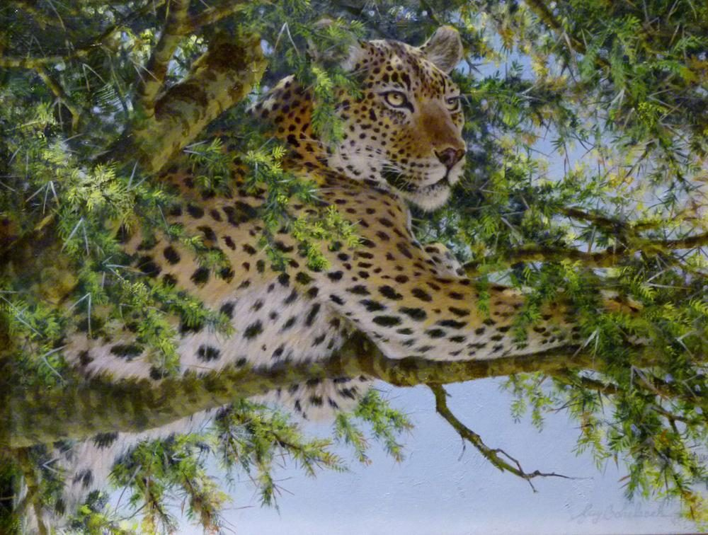"""KD Leopard Viewing""  -  16"" x 20"" ""KD Leopard Viewing"" - Leopards  Leoparp Paintings  Leopard Art"