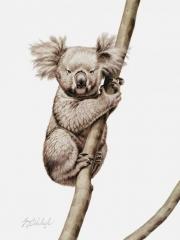"""Koala""FHG  -  16"" x 20"" ""Koala"" FHG - Critters   Small Game Paintings  Small Animals in Art"