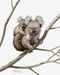 """Koala""RHA  -  16""x 20"" ""Koala"" RHA - Critters  Small Game Paintings  Small Animals in Art"