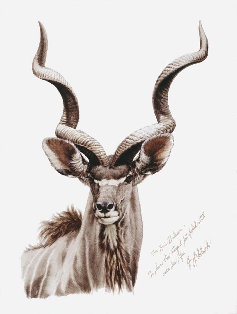 """Eric's Kudu""<BR>26"" x 18""  ""Eric's Kudu"" - African Game  African Game Paintings  Plains Game Art"