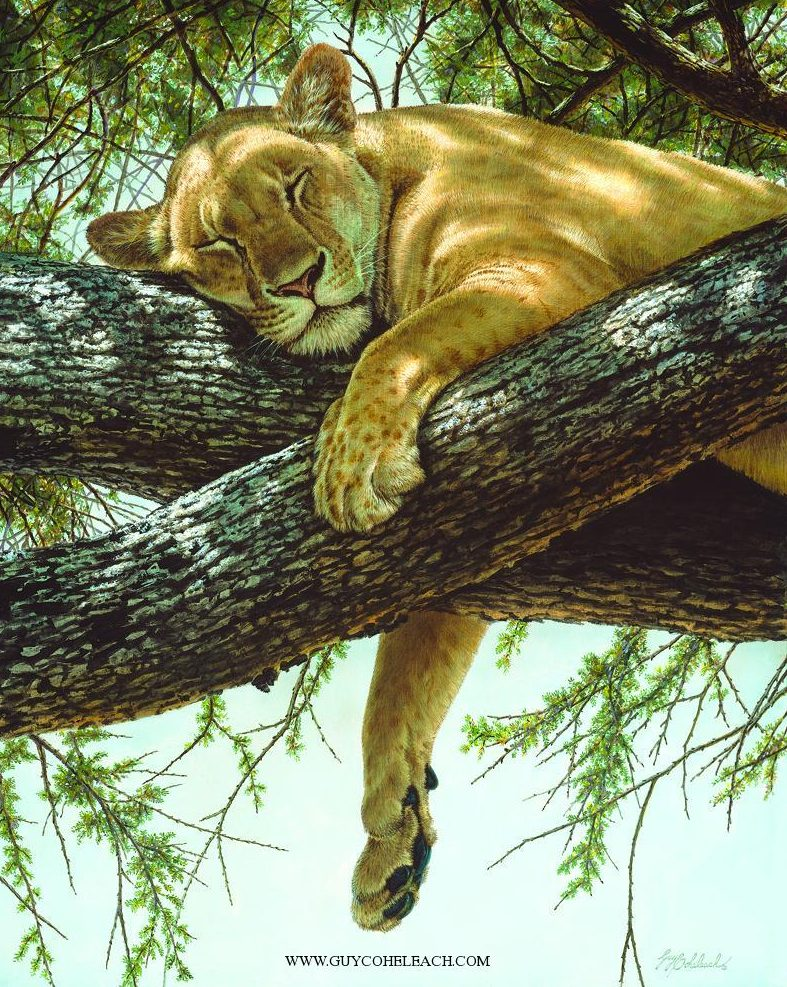 """""""Lake Manyara Lioness"""" """"Lake Manyara Lioness CMYK"""" - Lions  Lion Art  Lion Paintings"""