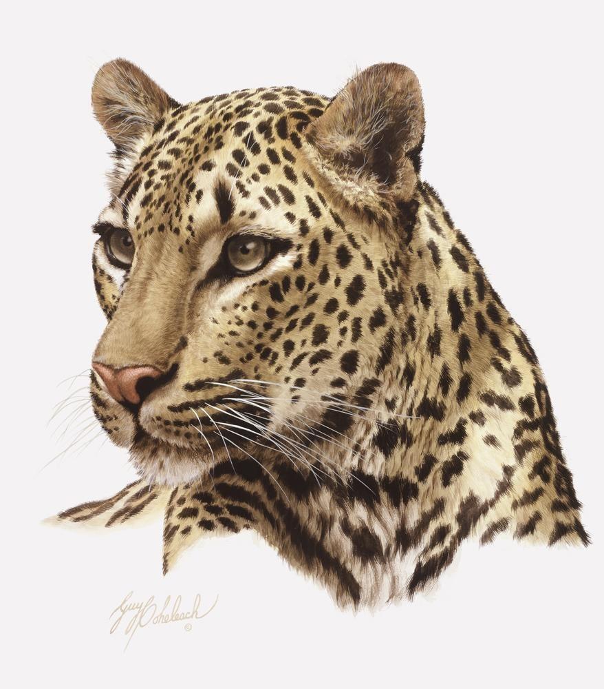 """""""Leopard Head""""  -  16""""x20"""" """"Leopard Head"""" - Portraits  Big Cat Heads  Cat Head Paintings"""