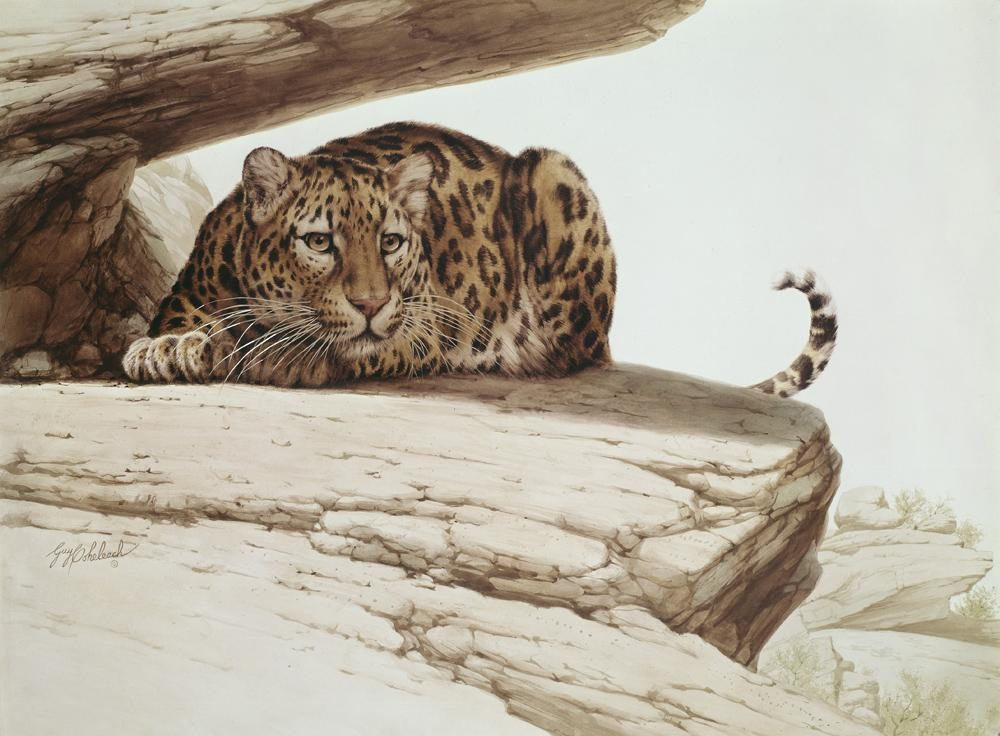 """Leopard On A Rock""  -  30"" x 40"" ""Leopard On A Rock"" - Leopards  Leoparp Paintings  Leopard Art"