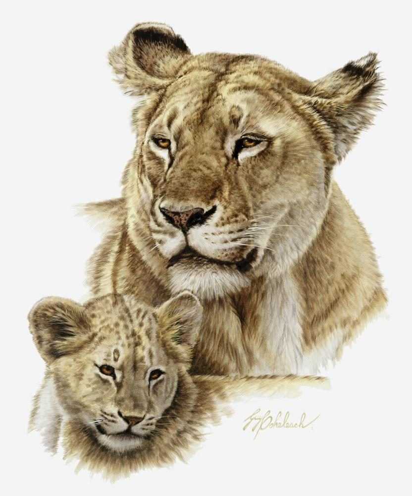 """Lioness & Cub""  -  18"" x 15"" ""Lioness & Cub"" - Portraits  Big Cat Heads  Cat Head Paintings"