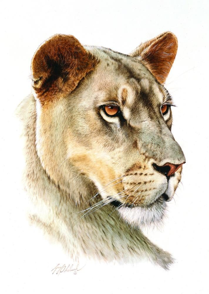 """Lioness Head""  -  16""x20"" ""Lioness Head"" - Portraits  Big Cat Heads  Cat Head Paintings"