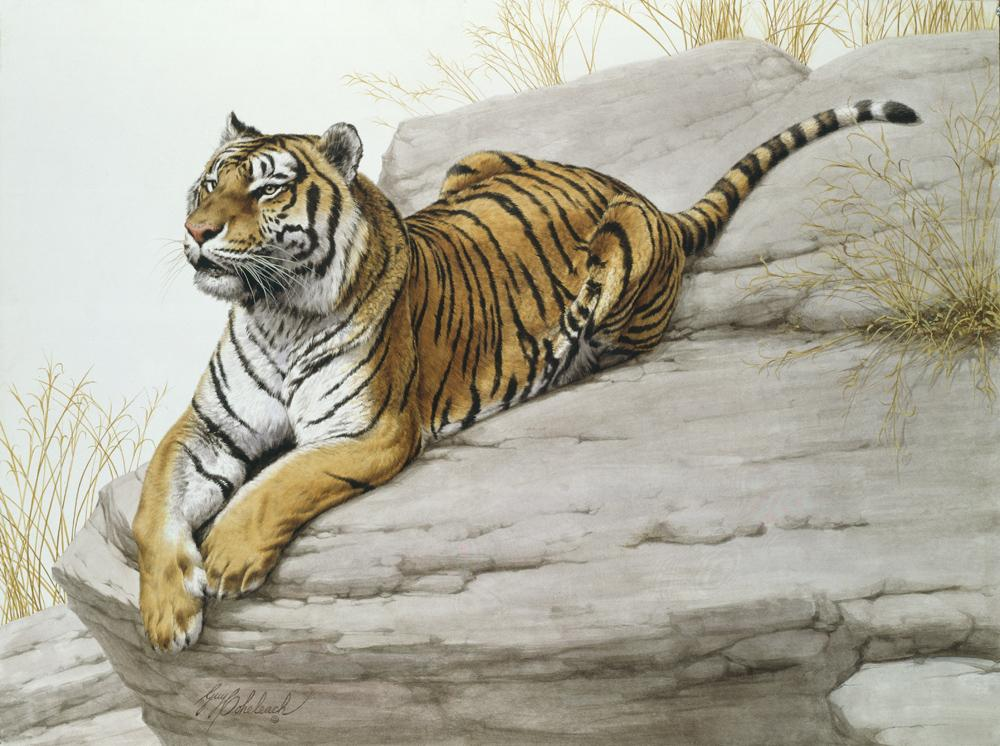 """Lookout""  -  30"" x  40"" ""Lookout"" - Tigers  Bengal Tiger  Siberian Tiger"