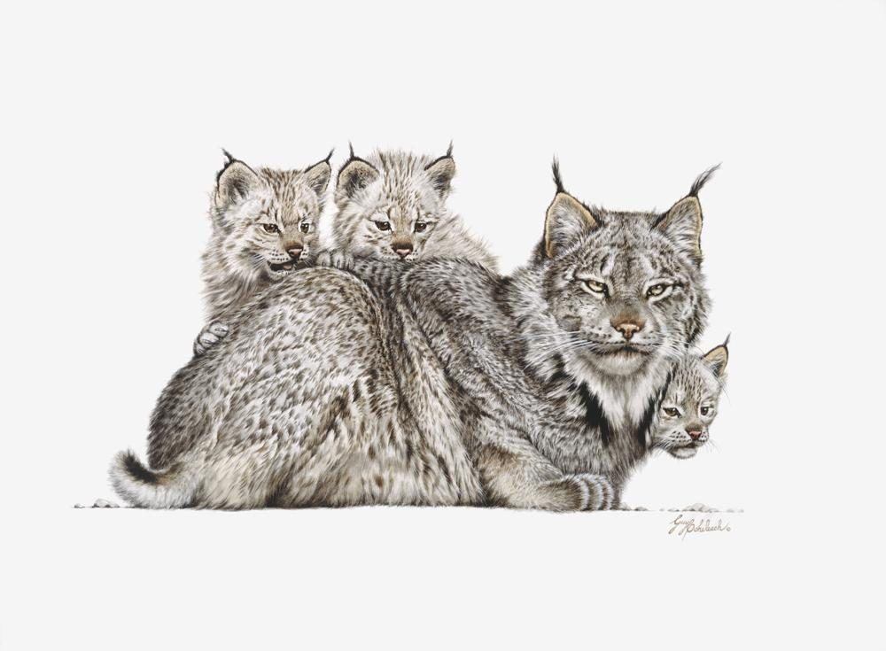 """Lynx Mother & Kittens""  -  16"" x 22"" ""Lynx Mother & Kittens"" - American Cats  American wild cats  Wild Felines of America"